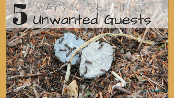 5 Ways to Get Rid of Unwanted Guests